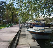 Tour Boats Lining Dalyan River by taiche