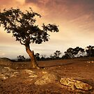 """Sunset Tree""Dog Rocks,Bateford,Geelong. by Darryl Fowler"