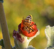 Bee dining 2 by Bonnie Pelton