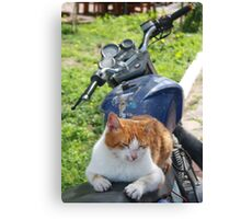 Ginger and White Tabby Cat Sunbathing on A Motorcycle Canvas Print