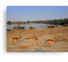 Elephants and Impala, Botswana Canvas Print