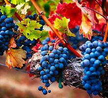Fruit of Napa Valley I by George Oze