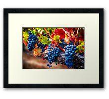 Fruit of Napa Valley I Framed Print