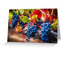 Fruit of Napa Valley I Greeting Card