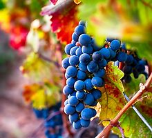 Fruit of Napa Valley II by George Oze