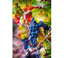 Fruit of Napa Valley II Photographic Print