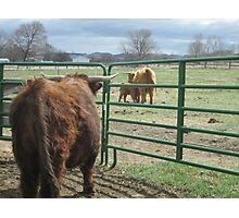 Brody, Roscoe, and Rossa  02 April 2015 Photographic Print