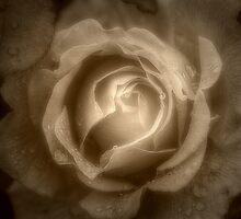 Raindrops on Roses 2 by Christine Lake