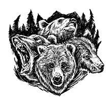 Four Bears Photographic Print
