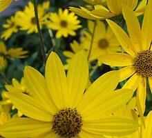 How Yellow by Terri Chandler