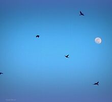 The Birds and the Moon by TrendleEllwood