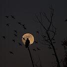 fly by moon by Heath Dreger