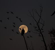 fly by moon by Heath Dreger