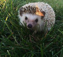 Loki the Hedgehog  by Emlyn  Orr