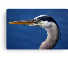 Great Blue Heron - Left Profile Canvas Print