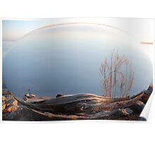Beached Cypress Poster