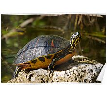 Happy Florida Redbelly Turtle Poster