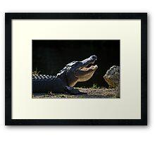 Basking 'Gator Framed Print