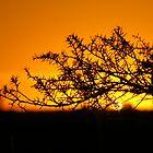 cathedral sunset i by Ike Faithfull