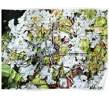 Wheel Bug on Crepe Myrtle Blooms Poster