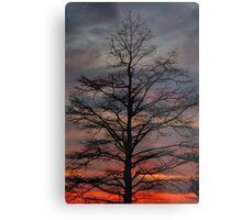 Sunset Cypress Metal Print
