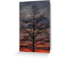 Sunset Cypress Greeting Card