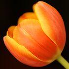 Orange Tulip by Michael Fotheringham Portraits
