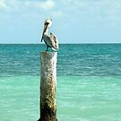 pelican post by dinghysailor1