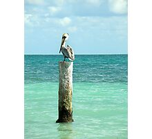 pelican post Photographic Print