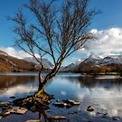 Lone Tree by Adrian Evans