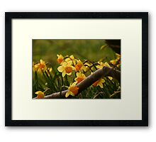 Daffy in the Woods Framed Print