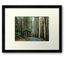 Black Spur, Yarra Ranges, Victoria. Framed Print