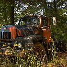 old workhorses never die, they just find some shade to rest in by jerrydeese