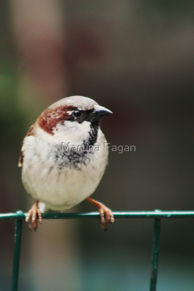 Bird on the Wire by Martina Fagan