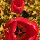 Red and Yellow by KMorral
