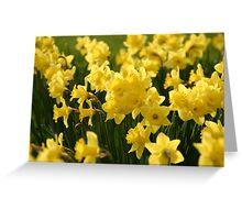 Host of Golden Daffodils Greeting Card
