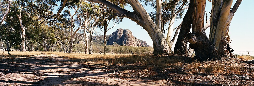 summer at arapiles by Andrew Cowell
