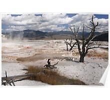 Dead Branches in the pools  of Mammoth Hot Springs, Yellowstone National Park, Wyoming, USA Poster