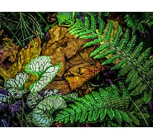 Fern in the Wood Photographic Print
