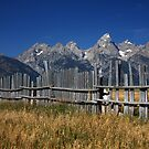 Fence with a View by noffi