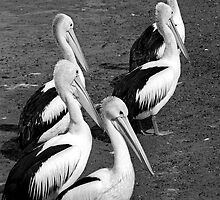 Five Pelicans by Yanni