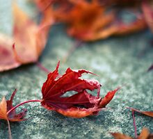 autumn by moniqe