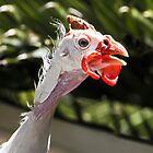 I am a White Helmeted Guinea Bird! by heatherfriedman