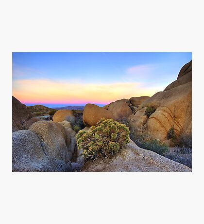 Sunset at Joshua Tree Photographic Print