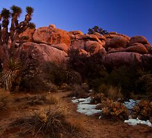 Last Light, Joshua Tree by Justin Mair