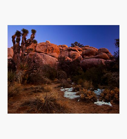 Last Light, Joshua Tree Photographic Print