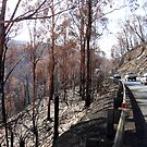 After the Fires. by Ern Mainka