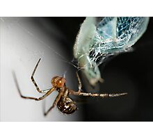 The spider and the fly Photographic Print