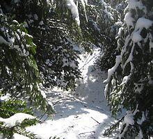 Snowy Trails by maxy