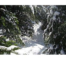 Snowy Trails Photographic Print